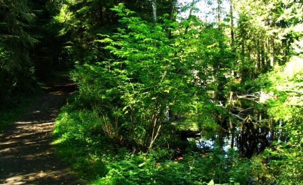 cranberry lake single men Cranberry lake, anacortes: see 29 reviews, articles, and 17 photos of cranberry lake, ranked no15 on tripadvisor among 44 attractions in anacortes.