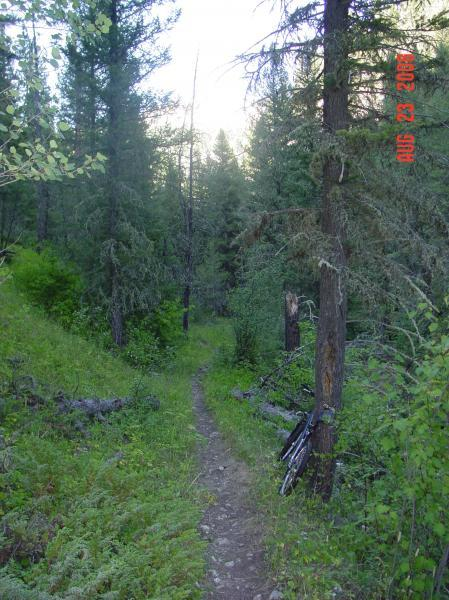 Pilgrim Creek
