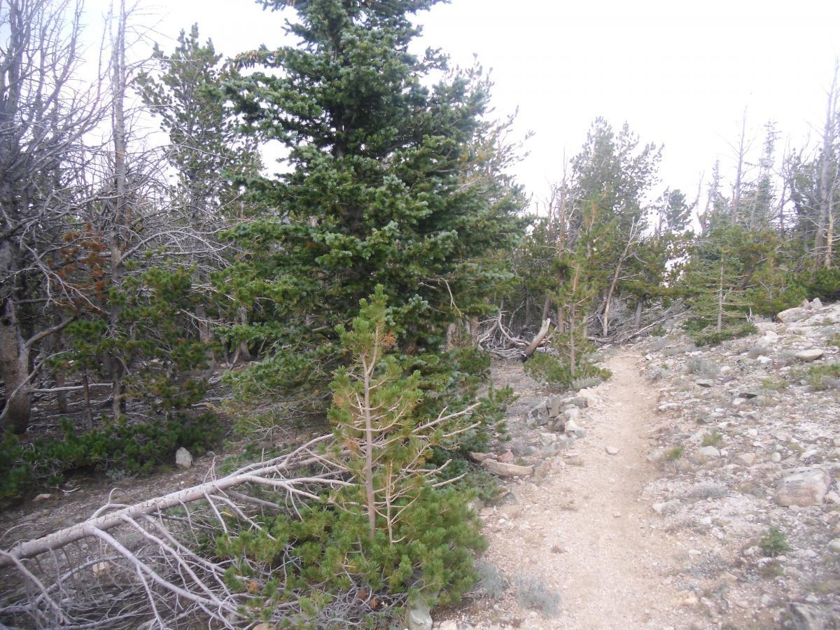 Line Creek Plateau
