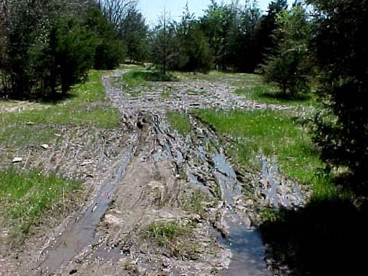 muddy-glade-area.JPG
