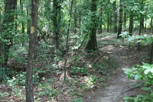 bartram-forest-singletrack