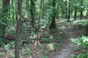 bartram-forest-singletrack