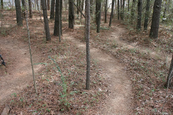 dense_trail_pic