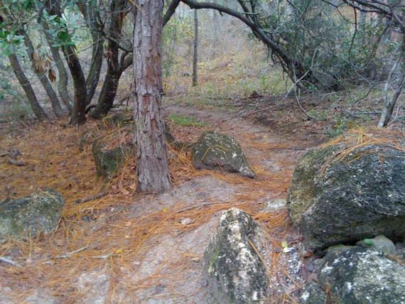 Mountain Bikes Trails in Florida Mountain Bike Trail Near