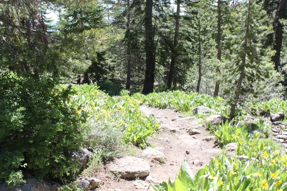 tahoe_rim_trail