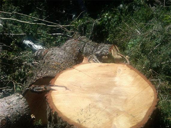 cut_tree1
