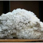 icebreaker merino wool