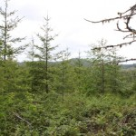 tillamook_forest5