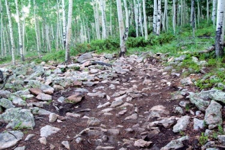 Pin on Adventure with mountain bike trail riding