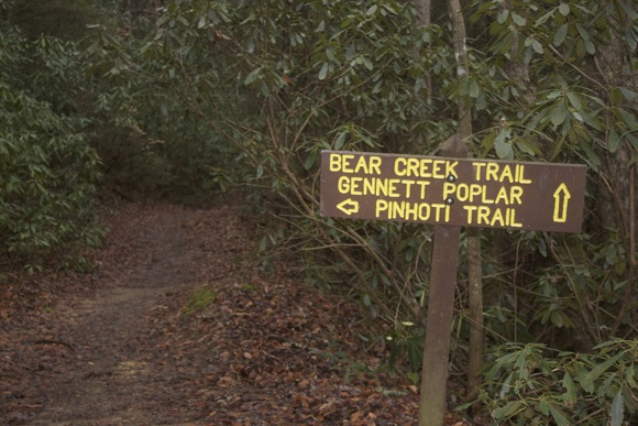 bear_creek_pinhoti3