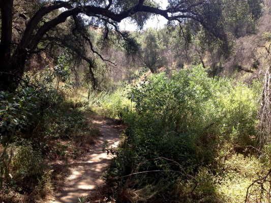 Rare vegetation on the Lower El Prieto trail.