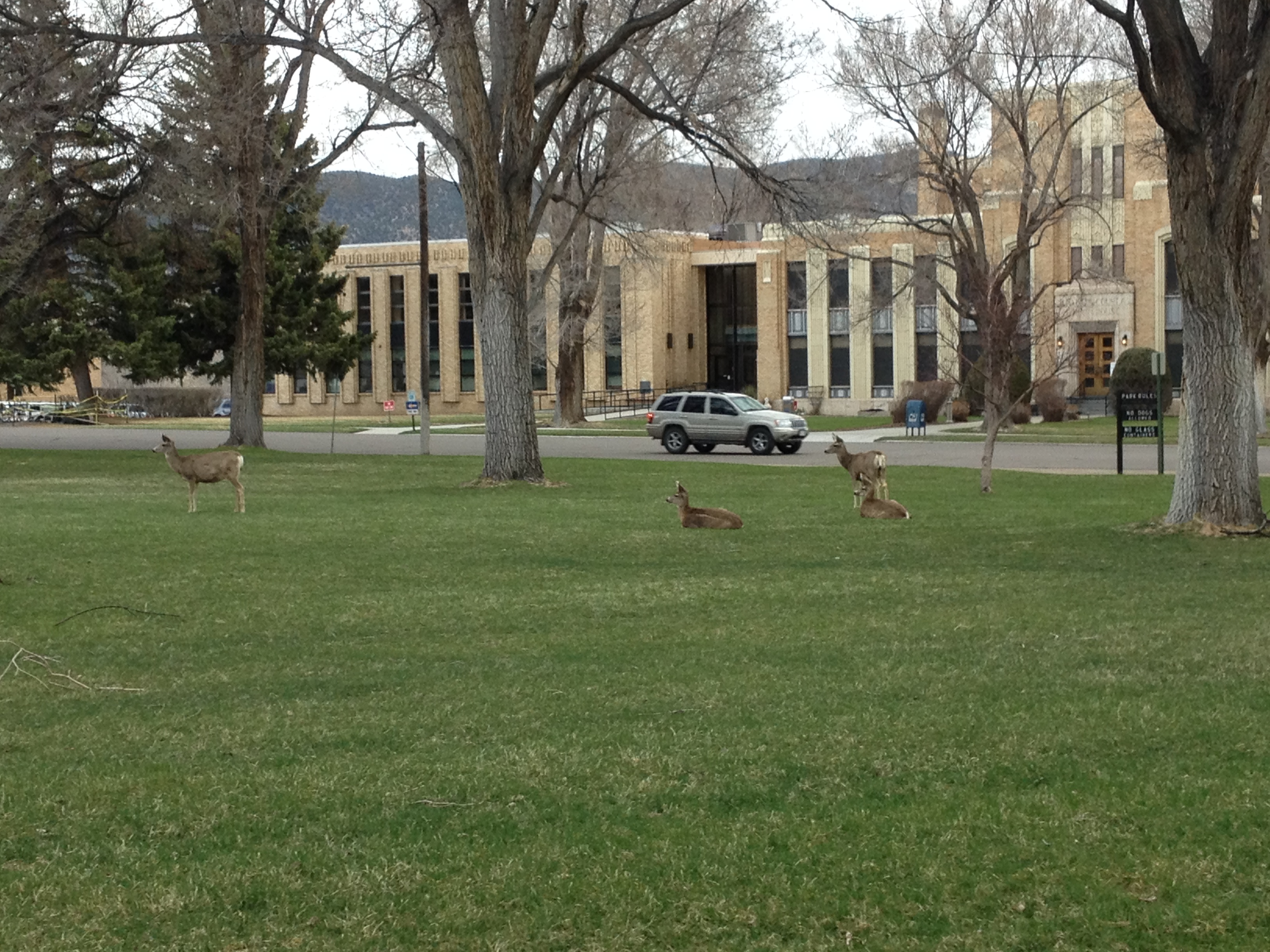 Observing some of the denizens of the local Salida deer herd