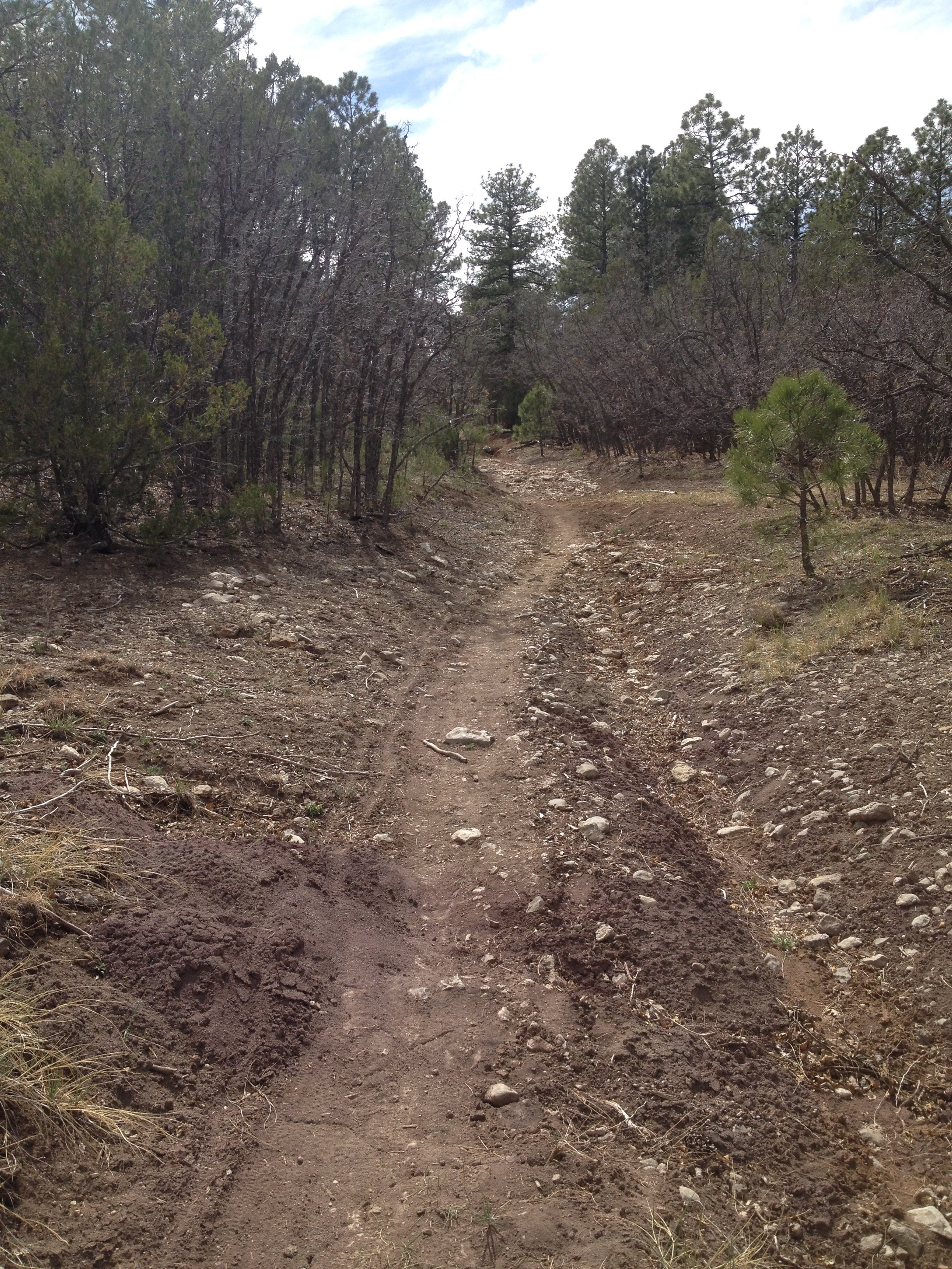 Smooth, cross-country singletrack nestled amongst the evergreens on Ponderosa.