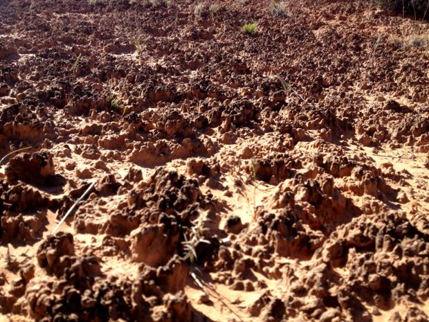 Exploring fresh dirt in moab navajo rocks loop for Living things found in soil