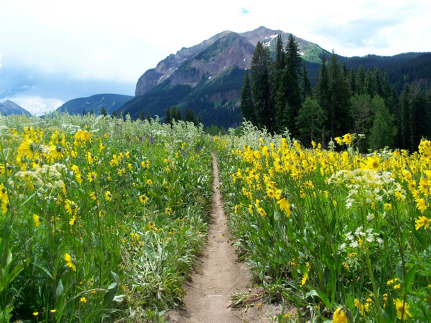 2014-06-06 Trail401-mtbgreg1-2