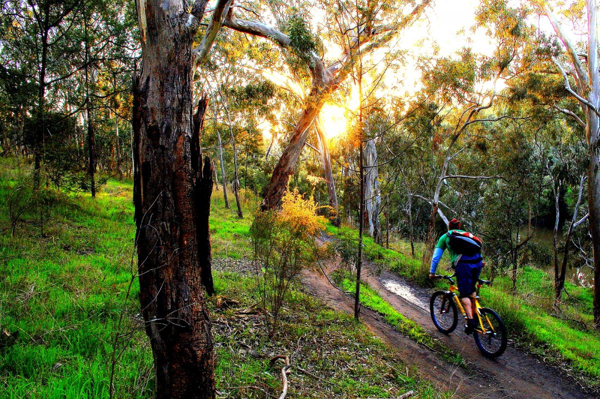 Riding along the river , Yarra Trail near the boathouse , Melbourne , Australia Photo: ottodavies