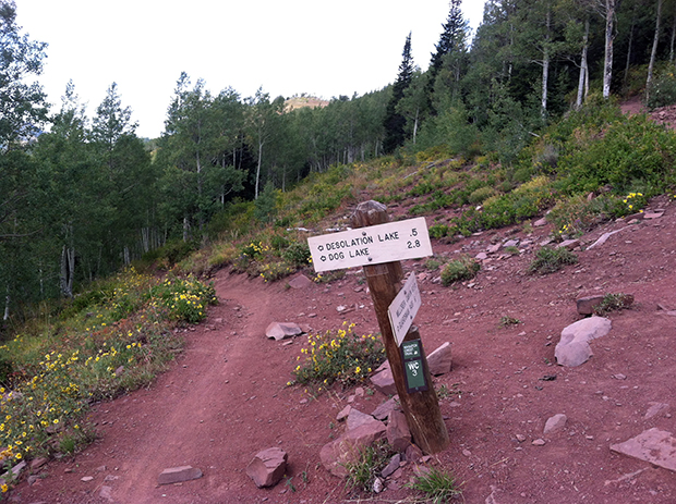 Riders heading for the entire Wasatch Crest trail will go right here; the Mill-D trail is to the left.