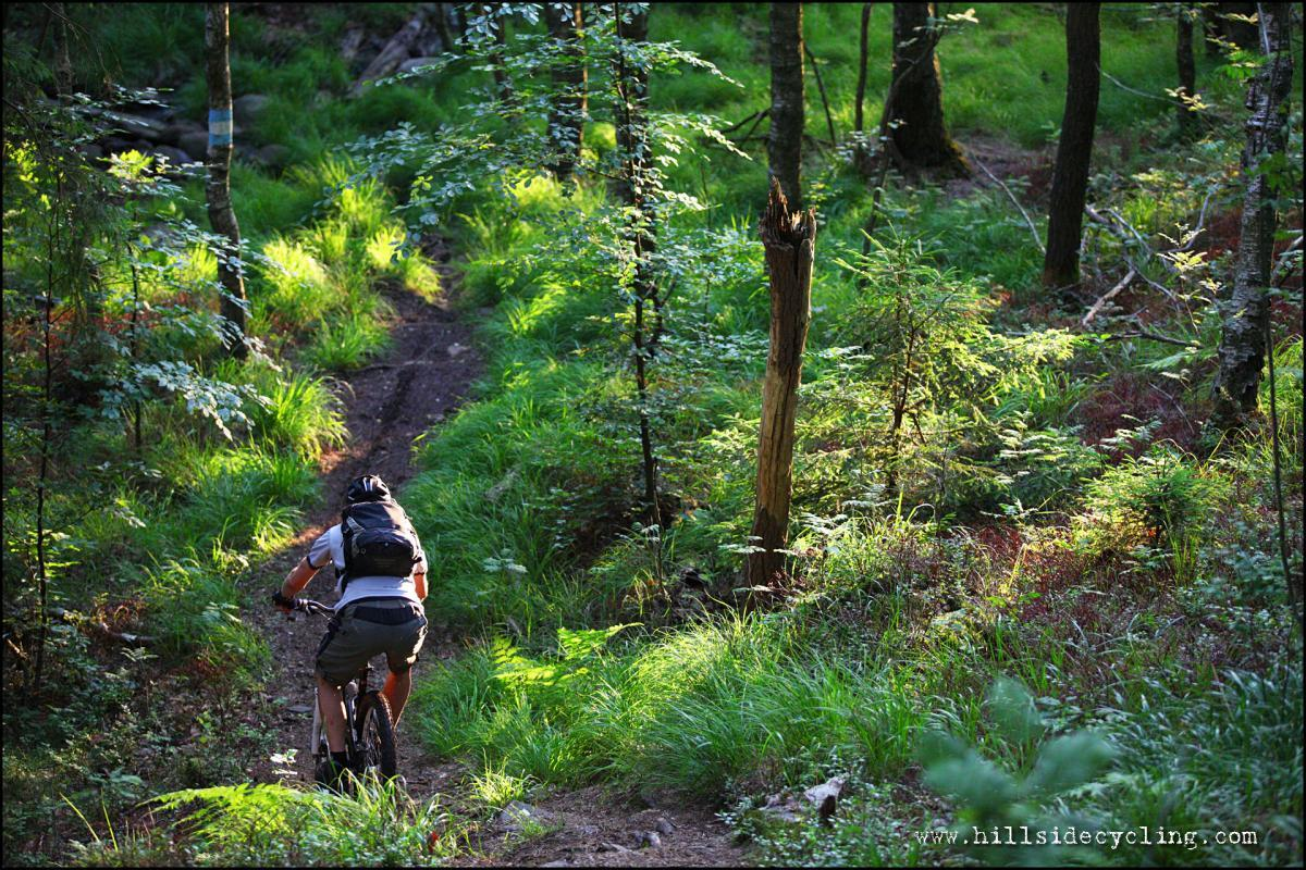 Sunset cruising on sweet trails. Rider: Leo Ranta Photo: Natasja Jovic