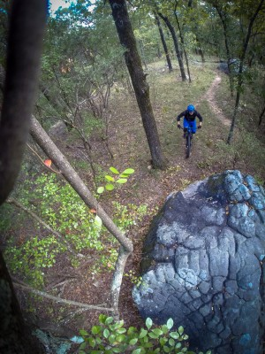 High quality singletrack on the Ridge trail at Oak Mountain. This is one of the many features to punch up and over