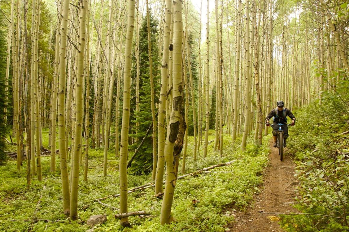 Trail: Green's Creek, Salida, Colorado. Photo: Jeff.