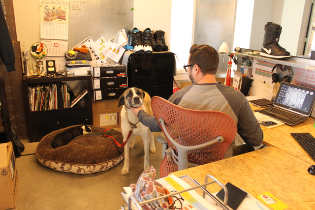 Boa is also extremely dog-friendly, with many hounds roaming the offices... or rather, staying put right next to their owner.