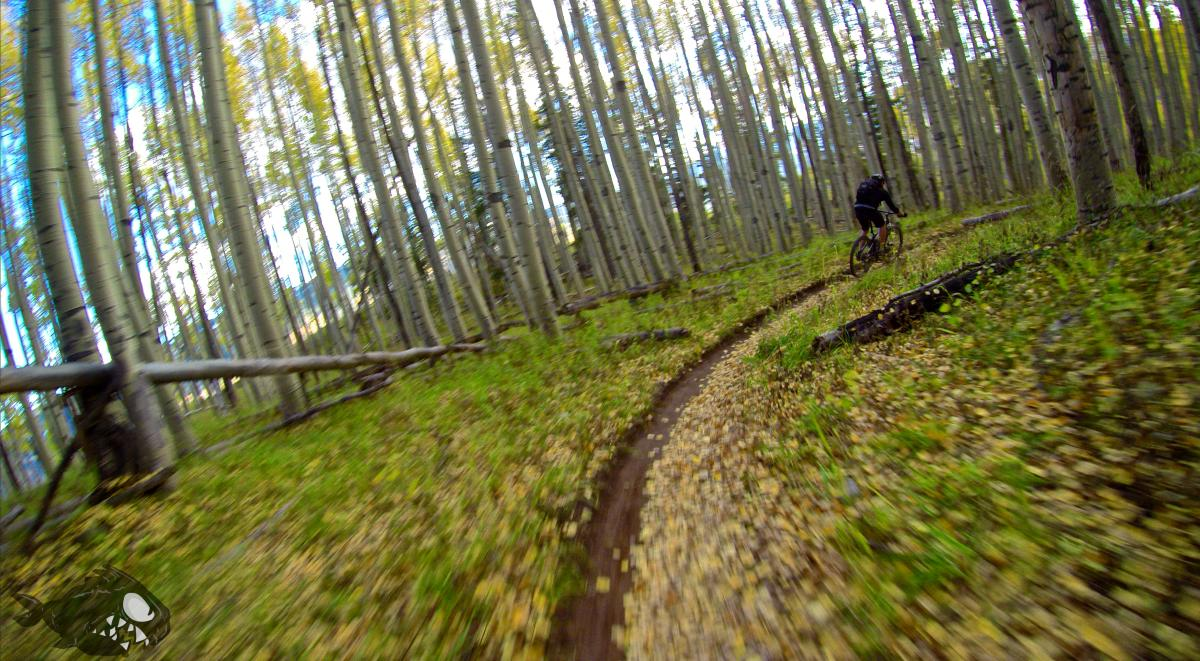 Buffehr Creek Trail. Vail, CO. 10/5/14. Photo: Erik Proano