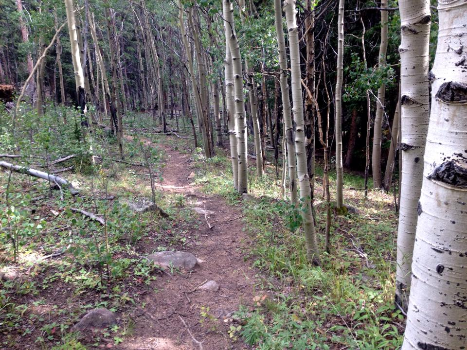 You could probably count on one hand the number of bikes that rolled down this trail last year. Just another trail discovered by heading off the beaten path.
