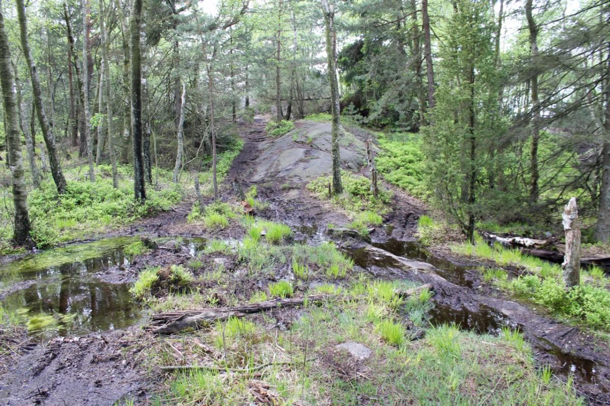 One of many muddy spots.