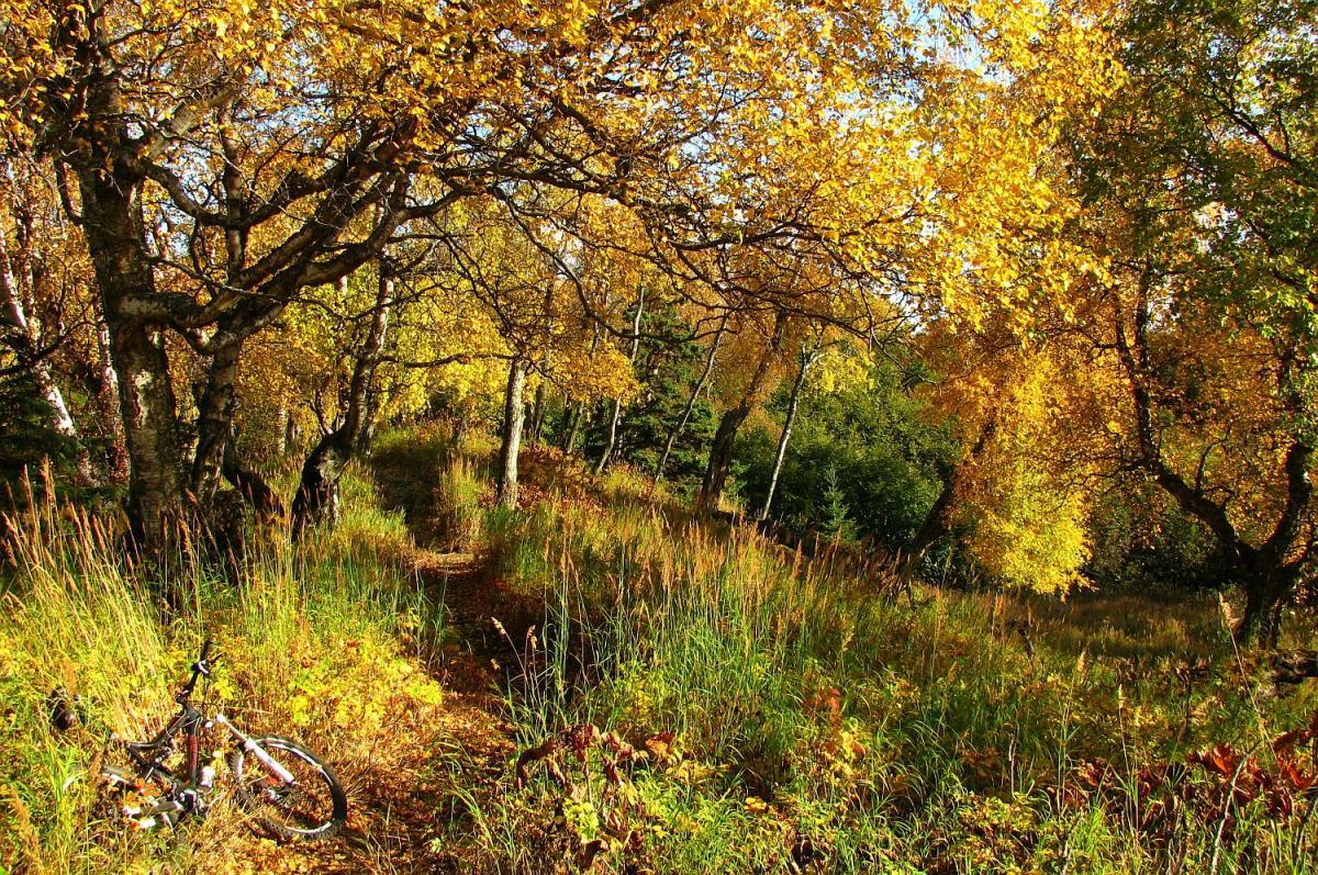 Kincaid Park. Photo: AK_Dan.