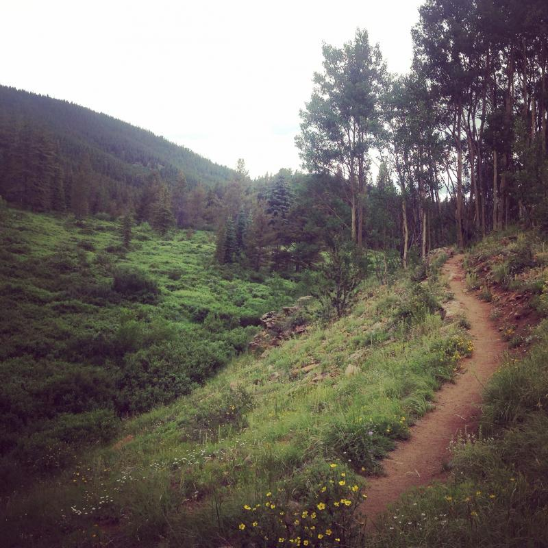 This trail in the Buffalo Peaks Wilderness would be sublime on mountain bikes. Photo: Greg Heil.