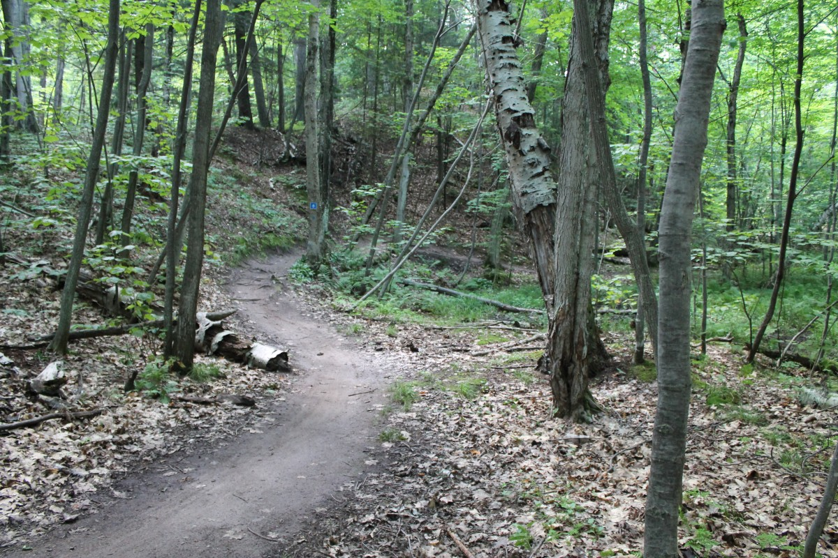 Typically flowy cross-country singletrack on the Mt Marquette trail.