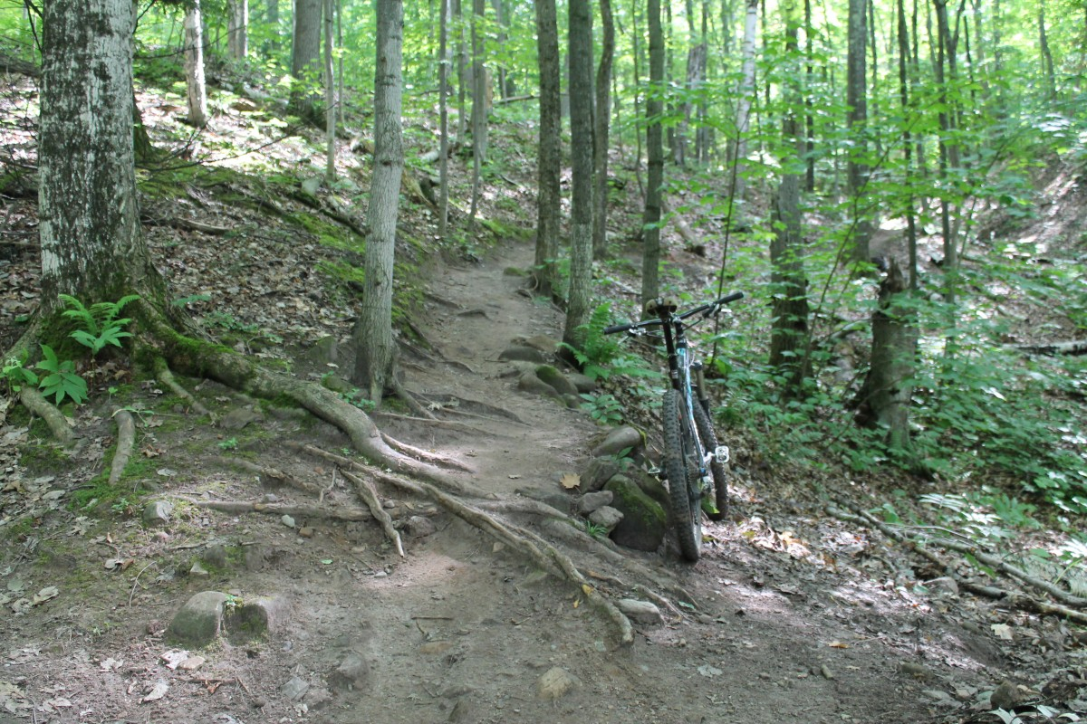 On some trails, the roots will interrupt flow, but that's not a bad thing.