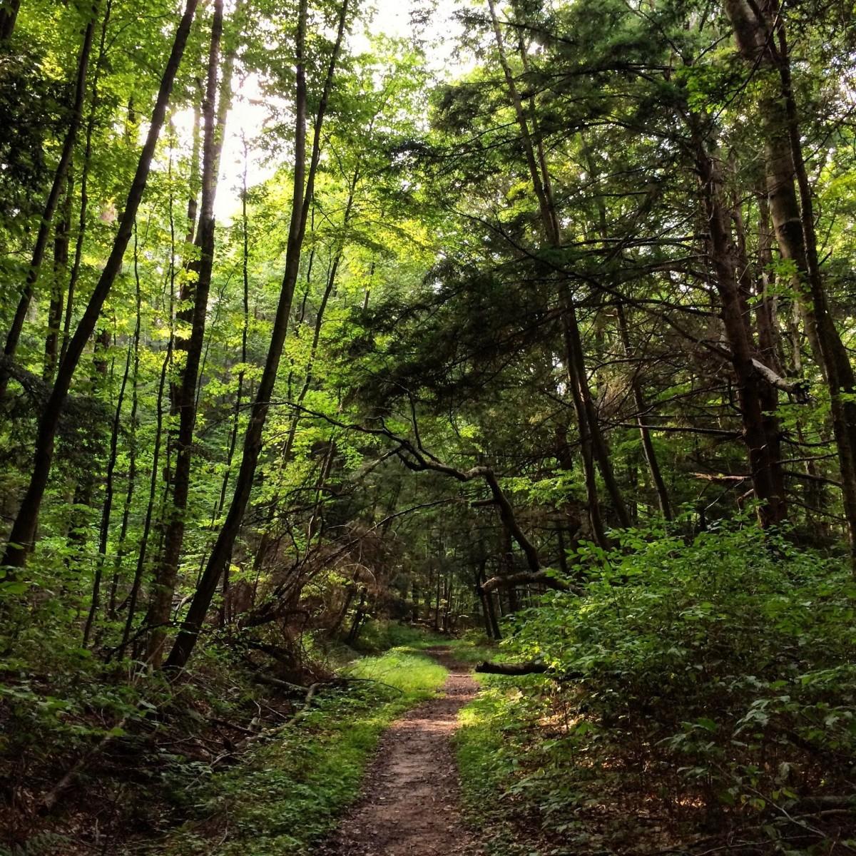 Tracy Ridge Trails. Photo by Brittany Dawkins, via alltrails.com.