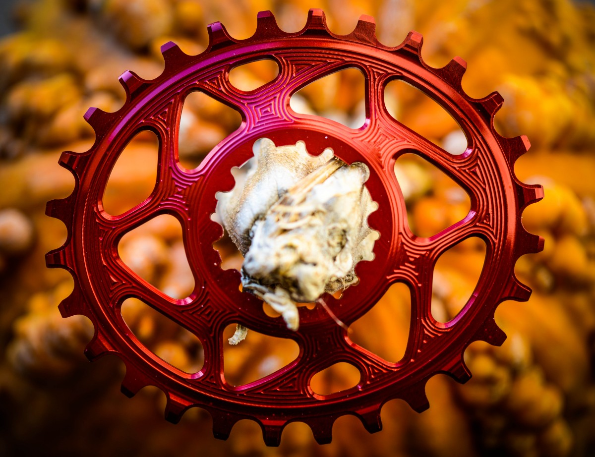 Beautiful craftsmanship and attention to detail make this chainring stand out