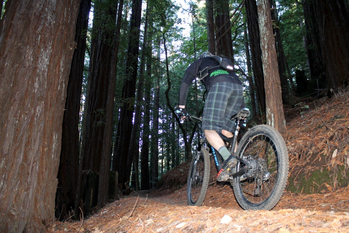 Don Palermini riding the Bronson beneath the deep, dark redwood trees.