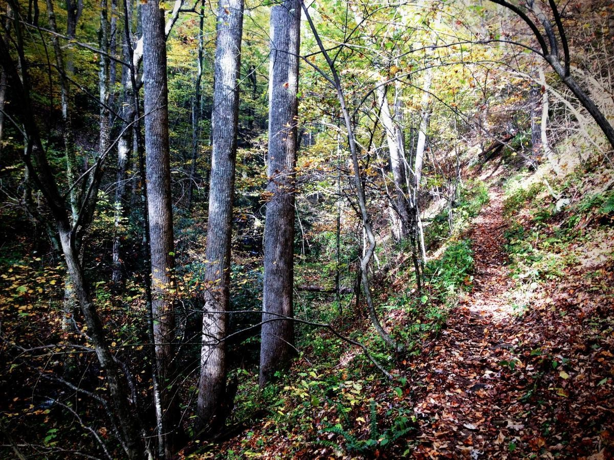 Pilot Cove, pictured here, is one of dozens of trails facing closure.