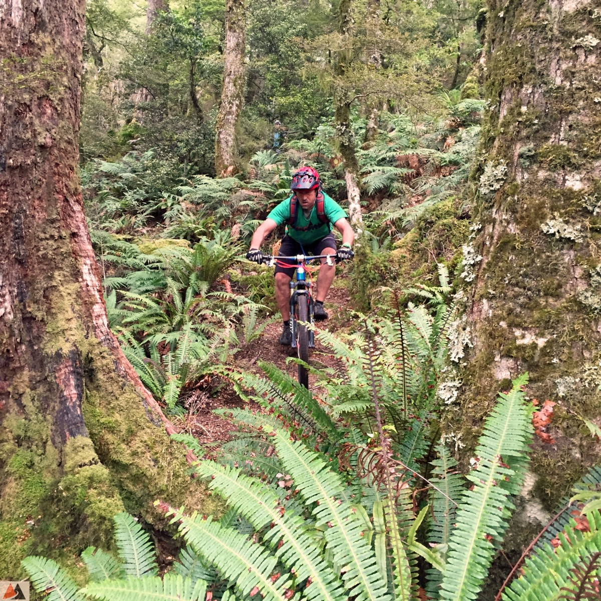 Aaron getting native in the Te Iringa backcountry