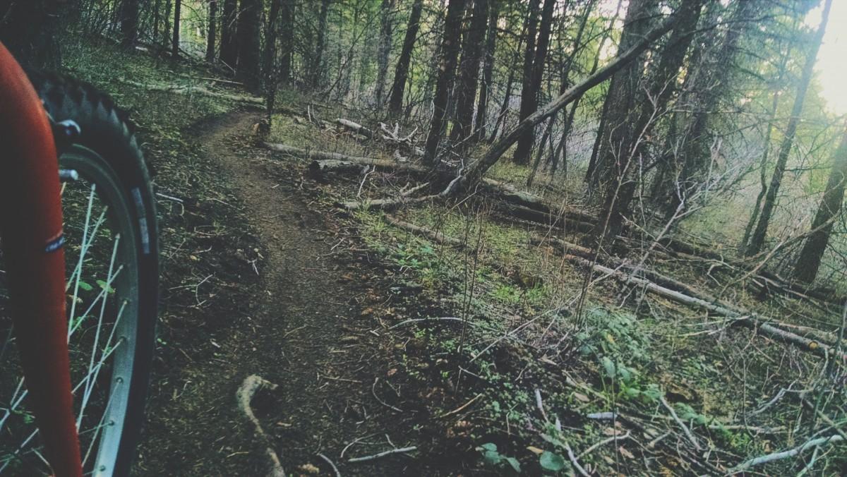These treed areas are prime black bear habitat