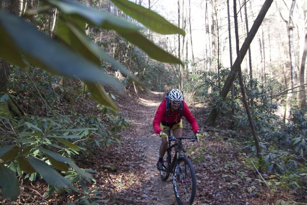 Bear Creek trail. Photo: Jeff Barber