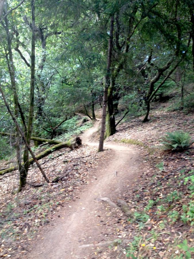 Singletrack at Camp Tamarancho, arguably the only decent, bike-legal singletrack trail in Marin. Photo: Greg Heil.