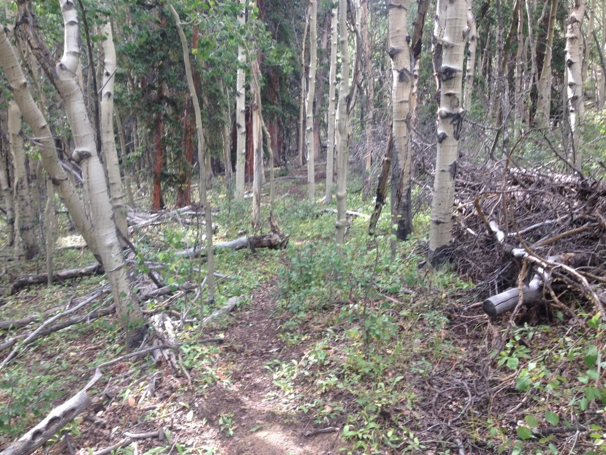 This trail is simply CLOSE to Wilderness, but since it dead ends at a Wilderness boundary, few people use it, and it is quickly fading away.