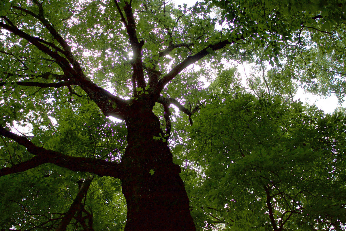 Atlanta works to preserve its forest canopy.