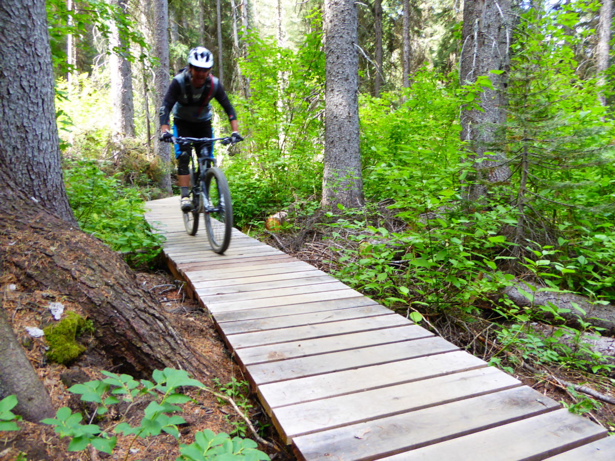 Boardwalk and forest on Jug Mountain's trails.