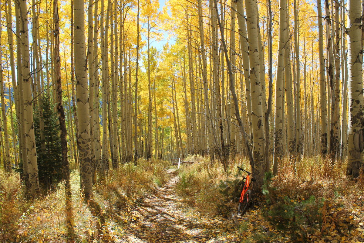 A Vail Haiku: Bright shimmering gold I am infinitely blessed by the autumn leaves