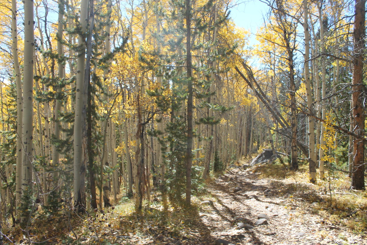 Finally, some aspens on the Lost Lake trail