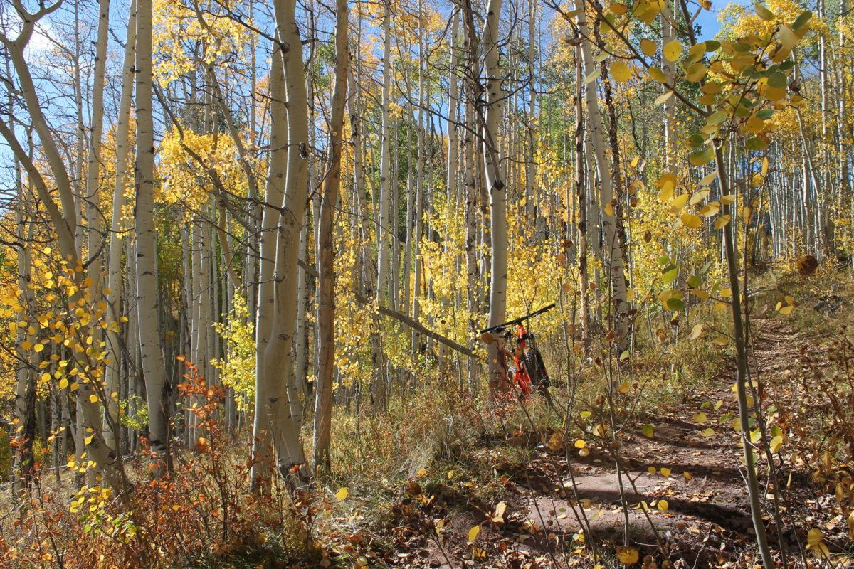Heading into the aspens on the Buffehr Creek trail