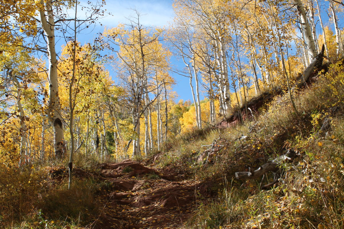 A brief rocky stretch on the mostly buff Buffehr Creek trail