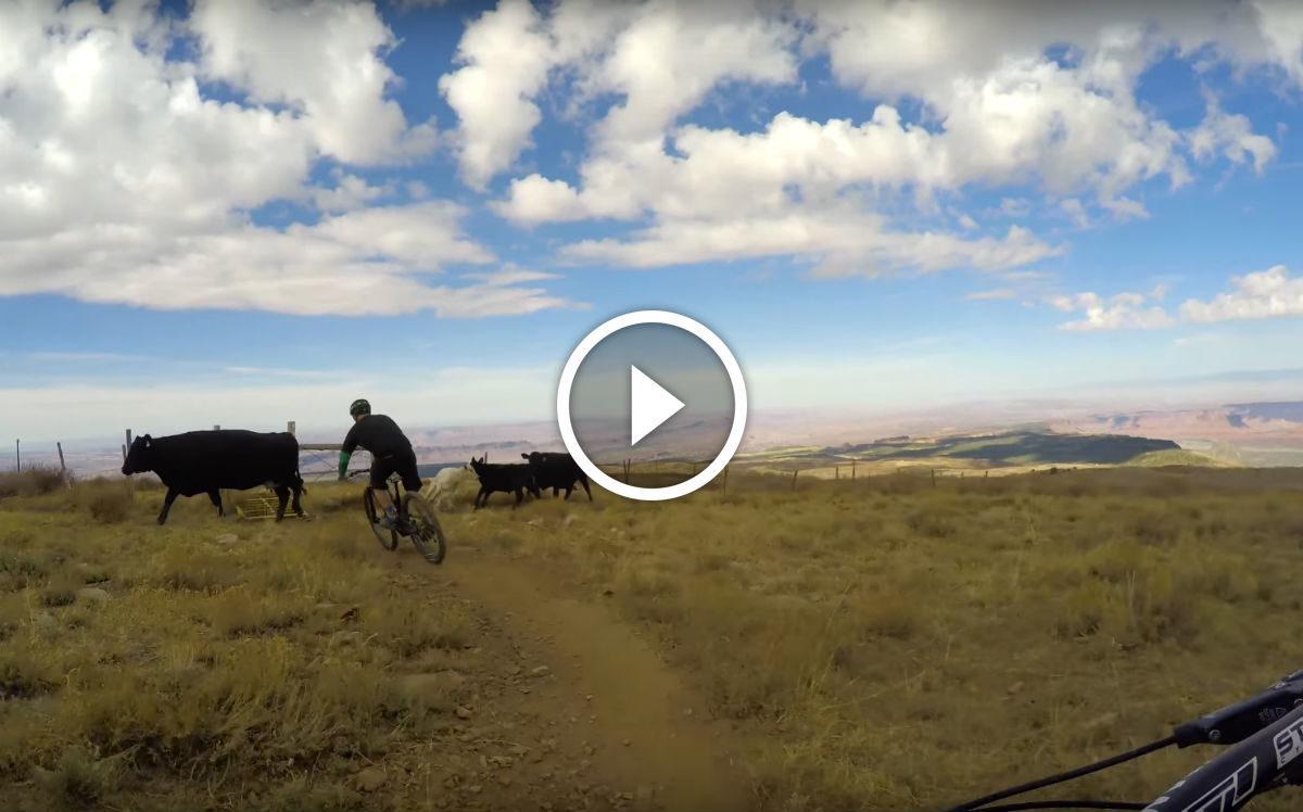 screen-shot-2016-10-19-at-11-edit-cow