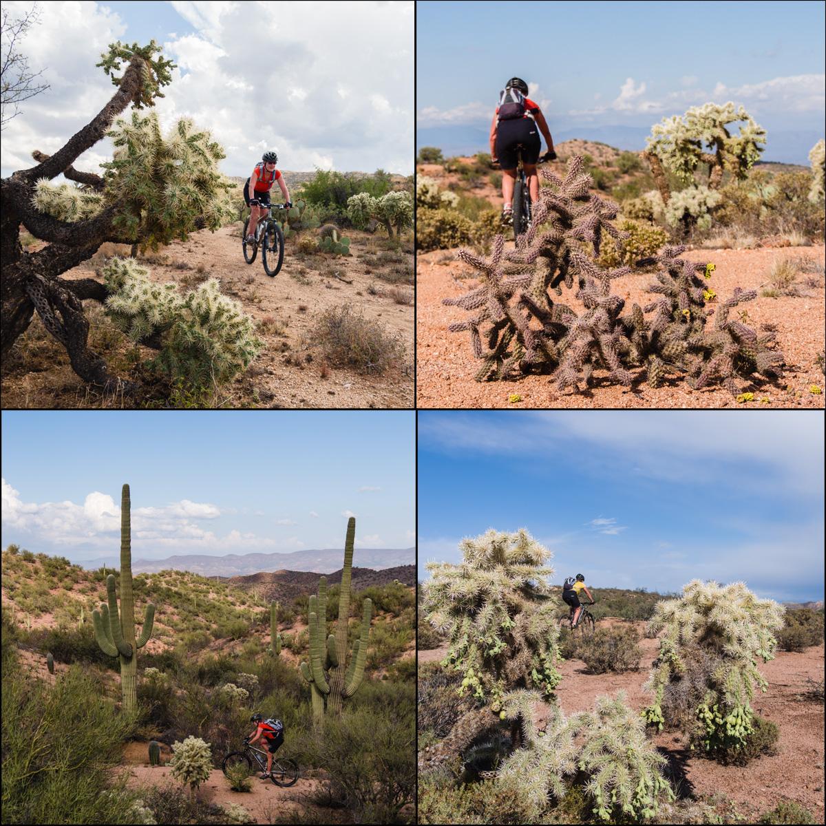 azt matrix cactus