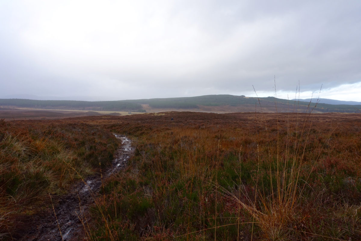Classic, muddy Scottish moor. Photo: Greg Heil